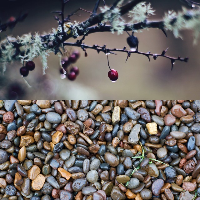 two images of winter nature, a thorny branch and wet rocks