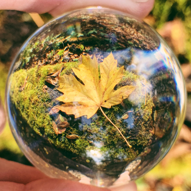 Yellow leaf on mossy log through a glass sphere
