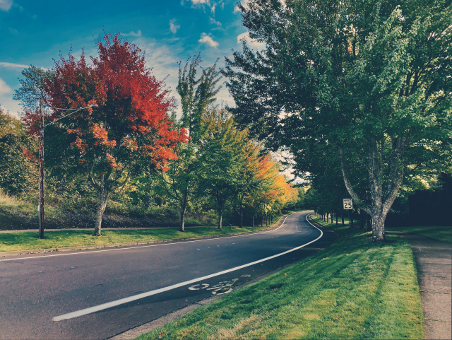 Trees with fall colors along a curved street