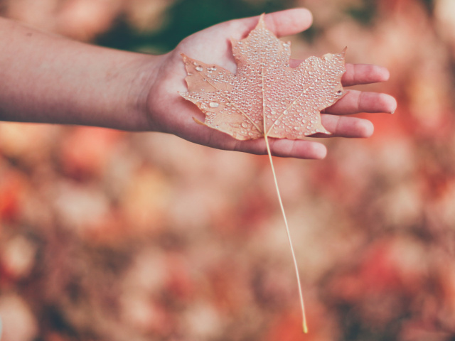 A hand holding a fallen leaf with a long stem