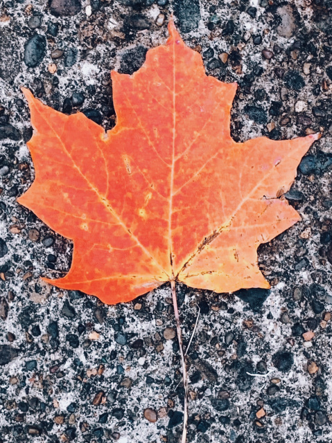 An orange and red leaf on cement