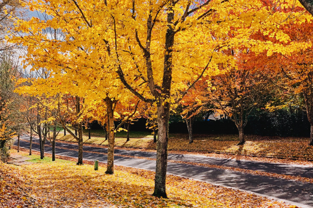 a street lined with yellow and red trees