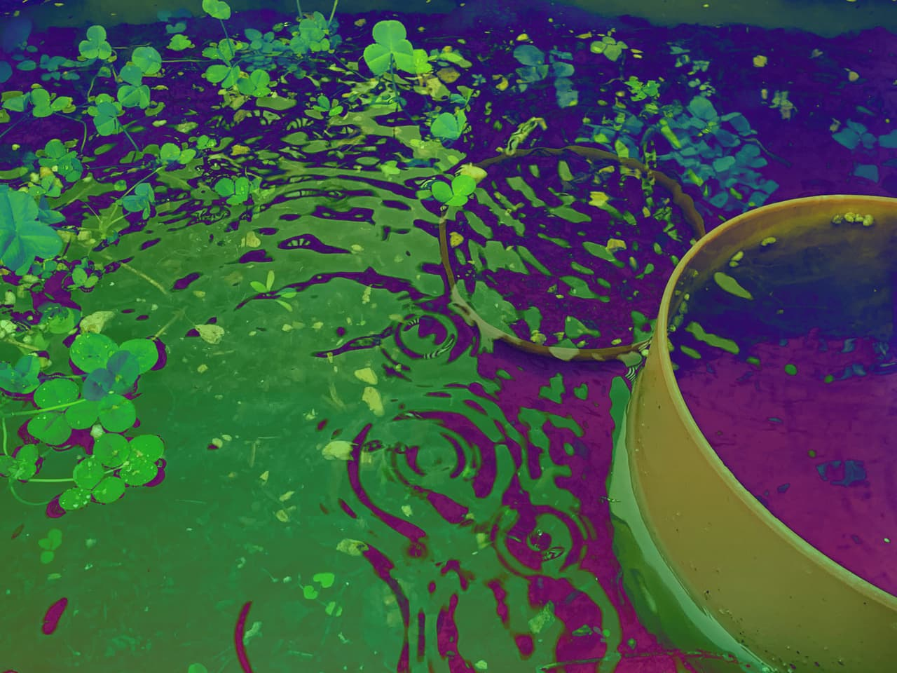 raindrops reflected on a surface with psychedelic colors