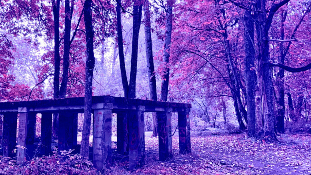 an abandonded structure in a forest with hue-shifted colors