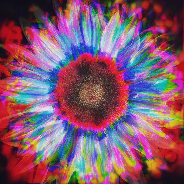 colorful digitally altered photo of a sunflower